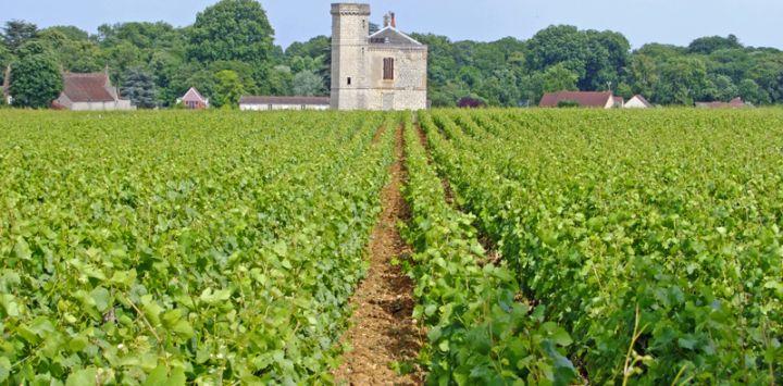 Burgundy Wine Vineyards