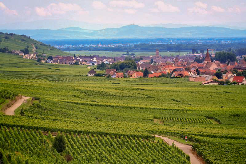 Alsace Grand Route - Wines of Alsace