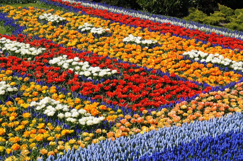 Getting to Know the Garden of Europe: Keukenhof Gardens