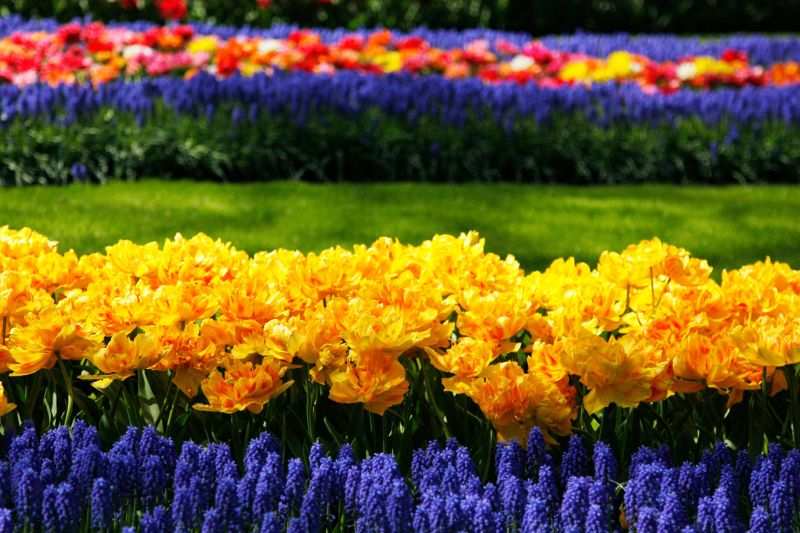 Keukenhof Garden of Europe