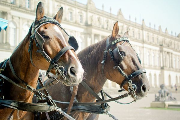 Enjoy a horse and carriage ride around Fontainebleu on our Renaissance Family Charter Cruises