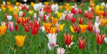 Flower Show 400