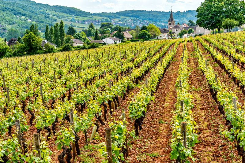 Vineyards on a French Barge Cruise