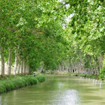 Trees lining the waterways on your Canal du Midi Holiday