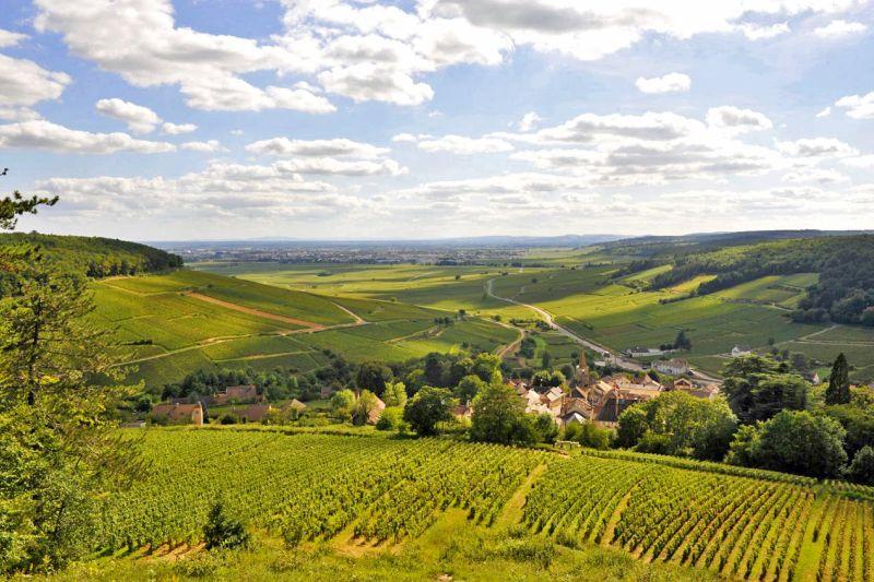 Rolling Hills Burgundy