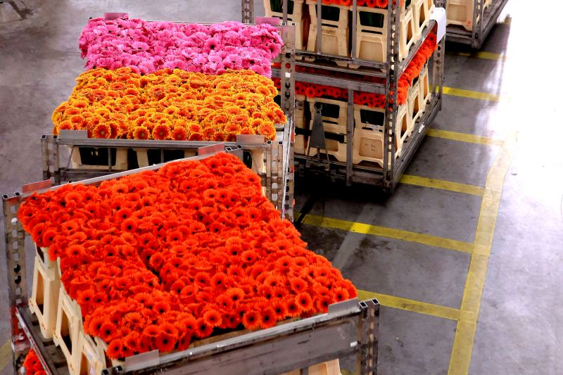 Flowers at the aalsmeer flower auction