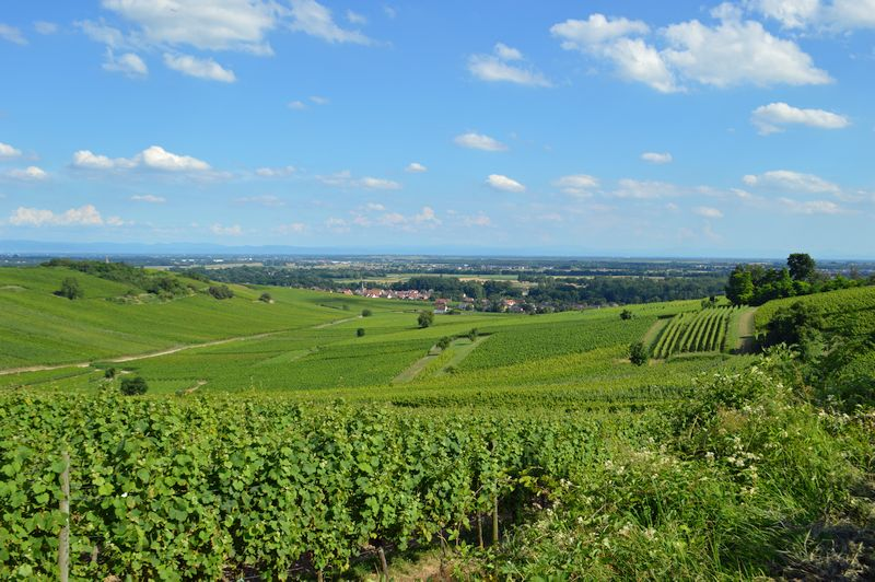 Alsace is one of the most beautiful French wine regions