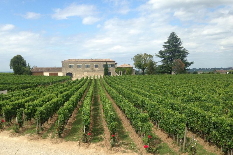 Vineyards, home to Bordeaux Wines