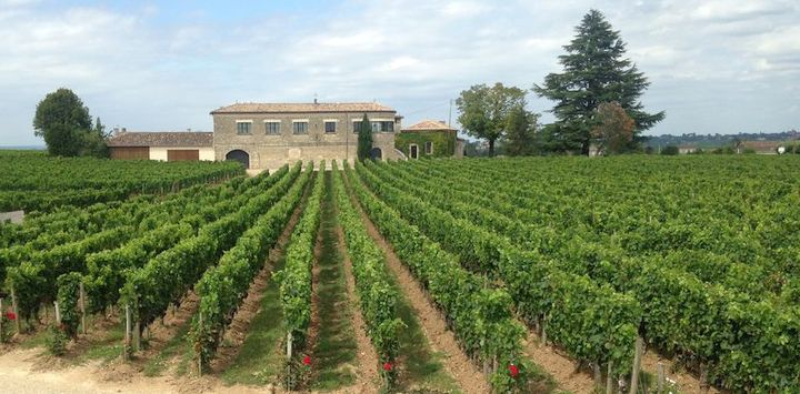 A Pocket Guide to the French Wine Regions