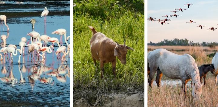 Wildlife on Europe's waterways