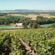 Champagne Vineyards overlooking the Marne River