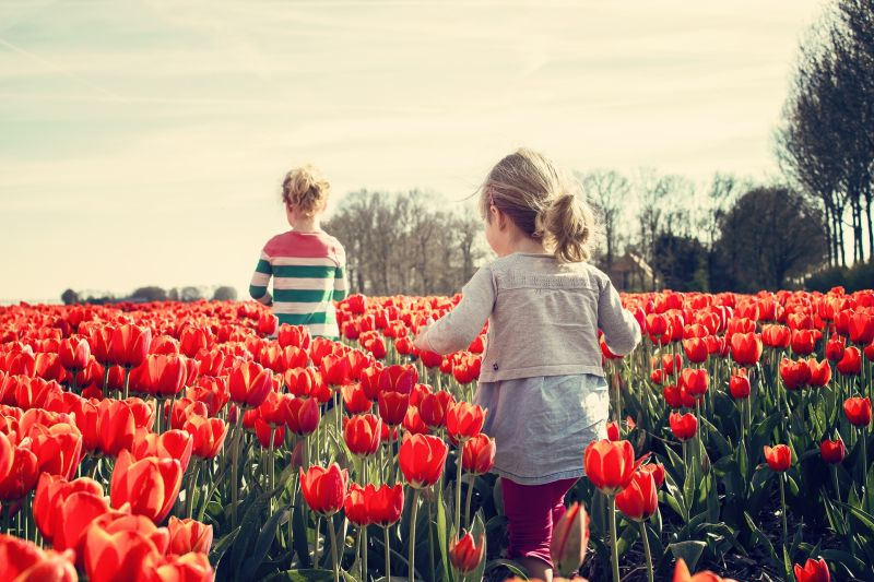 Tulip Fields - Keukenhof Gardens aboard river cruises in Europe