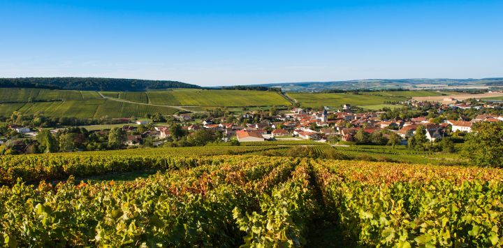 Sprawling Champagne Vineyards