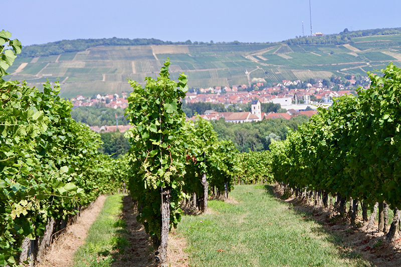 Alsace Countryside - one of the great French wine regions