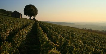 Burgundy-Vineyards-720x355