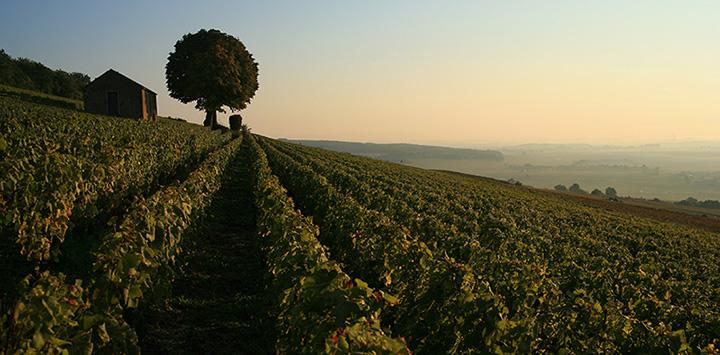 Burgundy-Vineyards-720x355