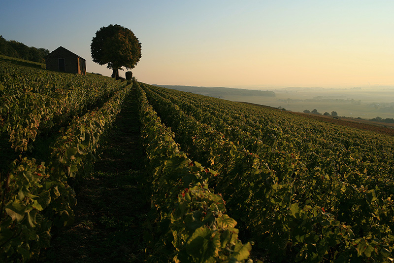 Burgundy Wine Guide