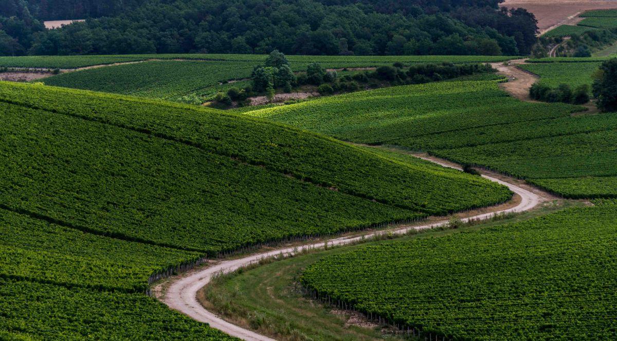 Burgundy's sweeping vineyards