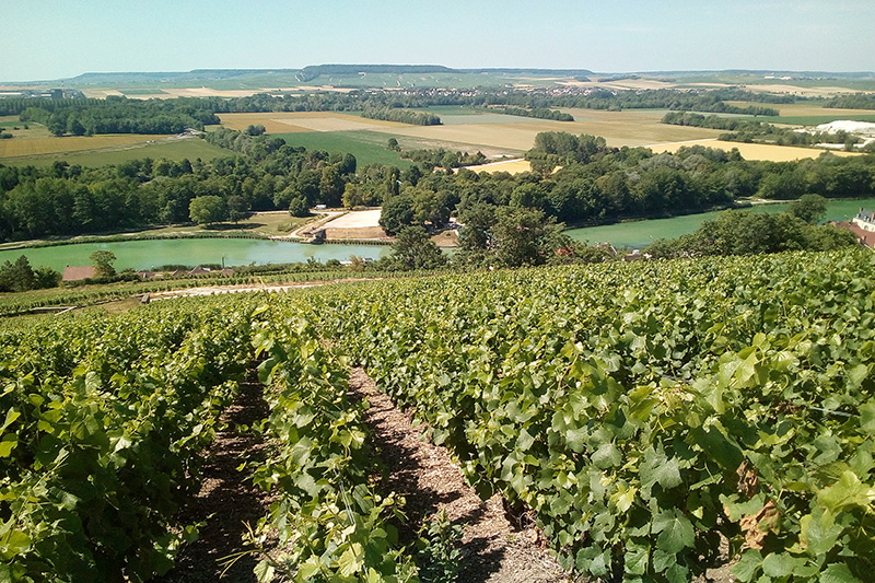 Champagne-Vineyards on the Marne River