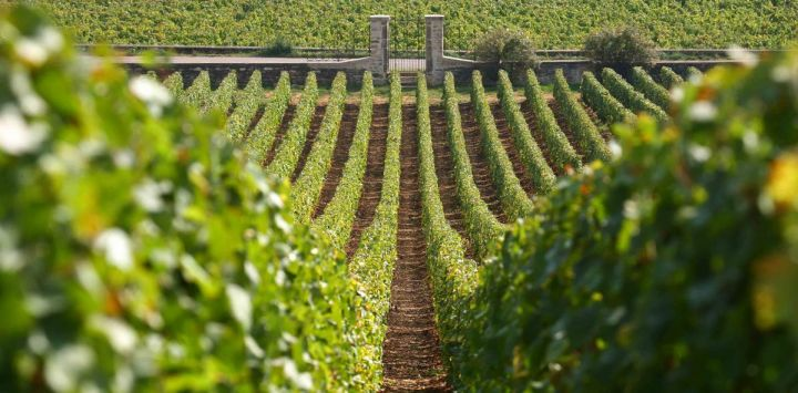 Climats, terroirs of Burgundy - a UNESCO World Heritage site