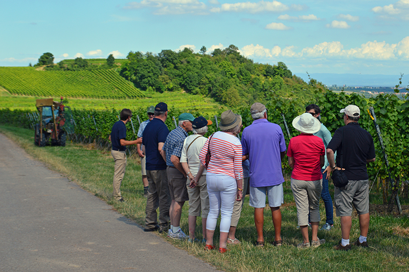 Guests on a wine-tasting tour among Burgundy's vineyards in the summer months