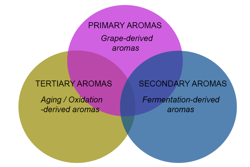 Understanding wines - primary, secondary and tertiary aromas chart
