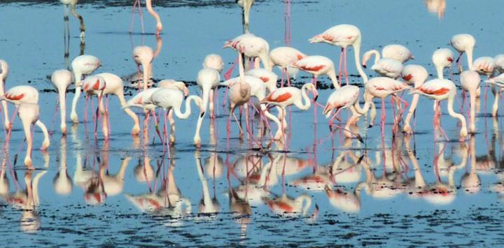 Flamingos can be found in Northern Italy's Po Delta. Discover the Po Delta aboard La Bella Vita as she cruises Venice to Mantua