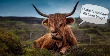 highland-cow-unsplash-prev2