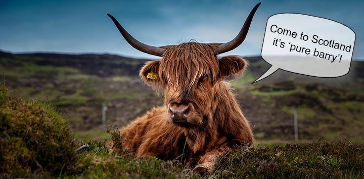 highland-cow-unsplash-prev2