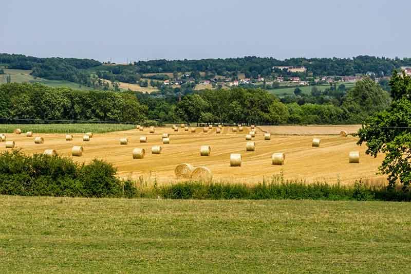 Burgundy in the summer months