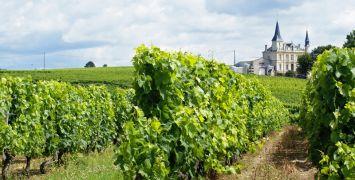 Bordeaux Wine Guide