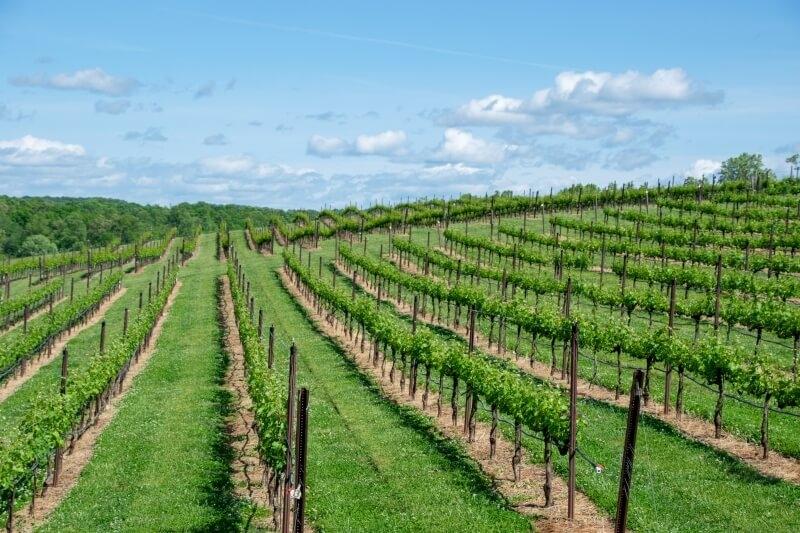 Bordeaux Wine Guide - Bordeaux Vineyards