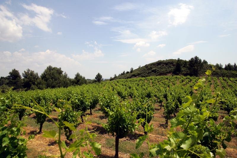 Languedoc Wine Region