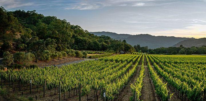 Rhone Valley Wine Region